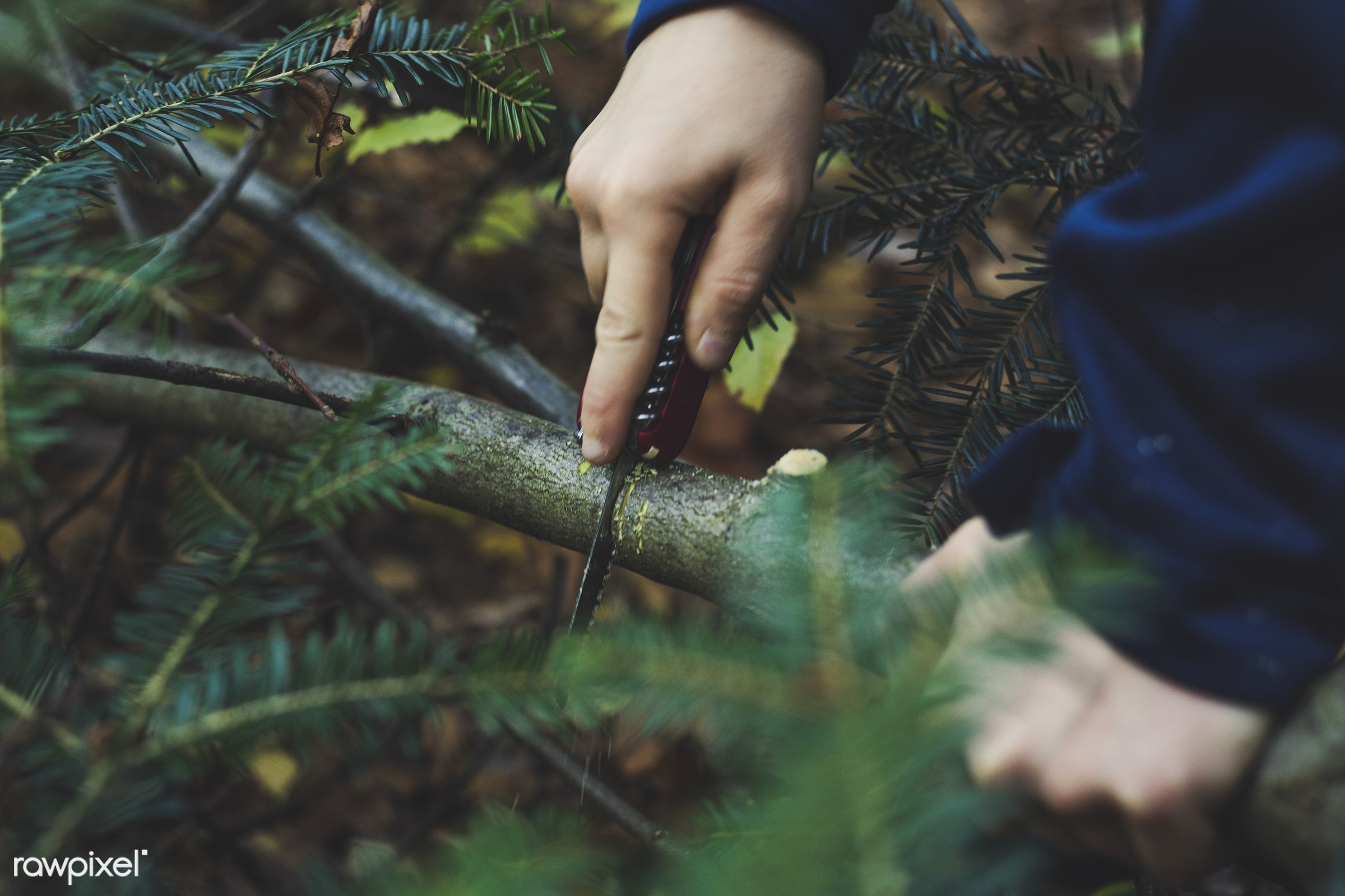 Man cutting a tree - agriculture, branch, cc0, cut, cutting, environment, forest, landscape, man, nature, outdoors, park,...