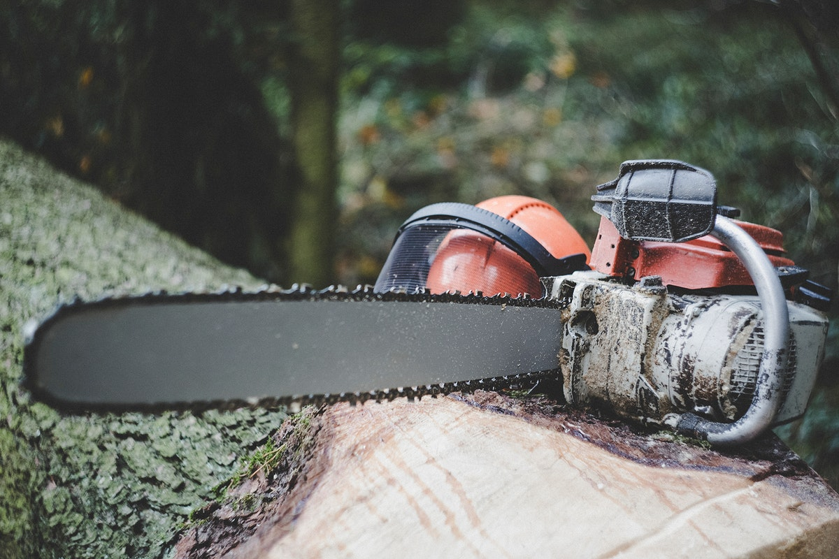A chainsaw on a tree