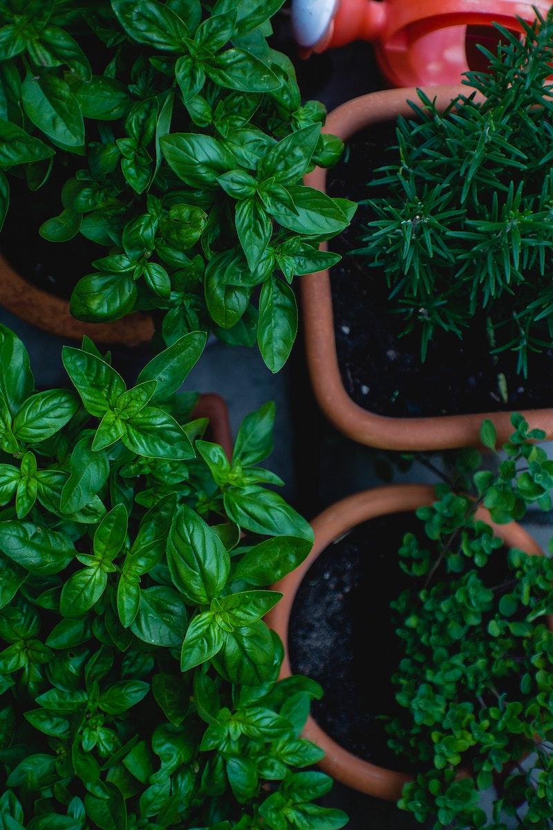 Close up of fresh herbs