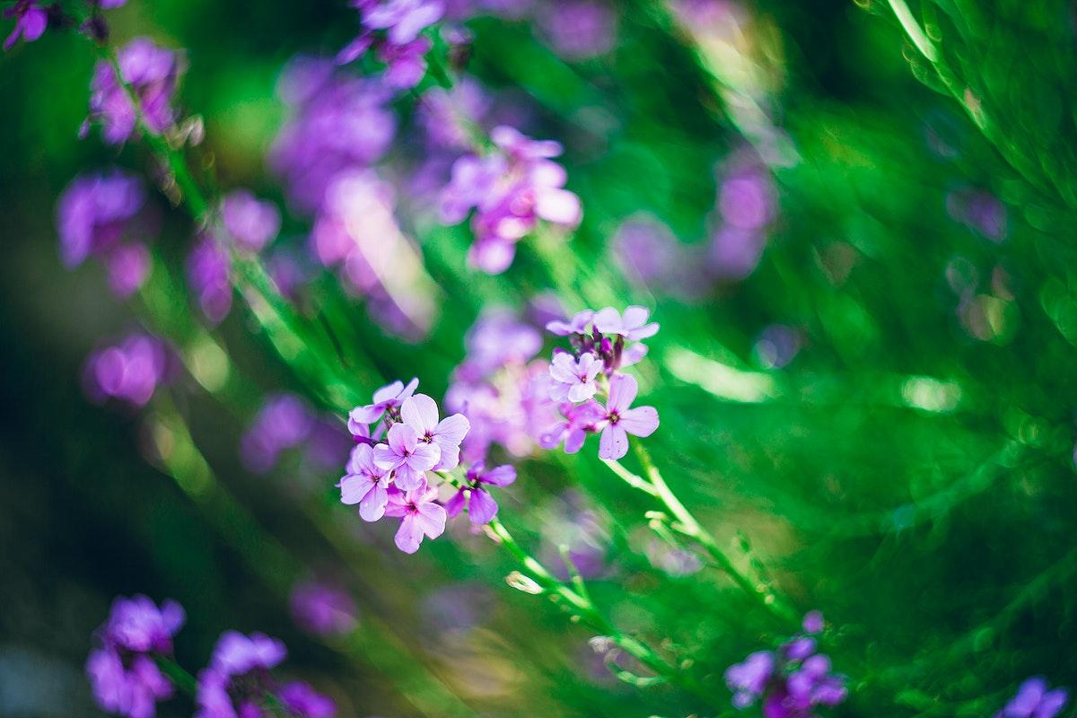 Closeup of beautiful pink flowers