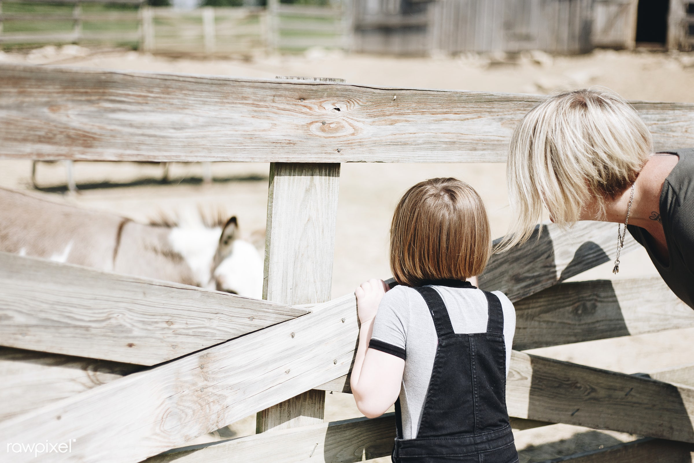 A Caucasian family is spending time at the farm together - america, american, canada, canadian, cares, caucasian, cheerful,...
