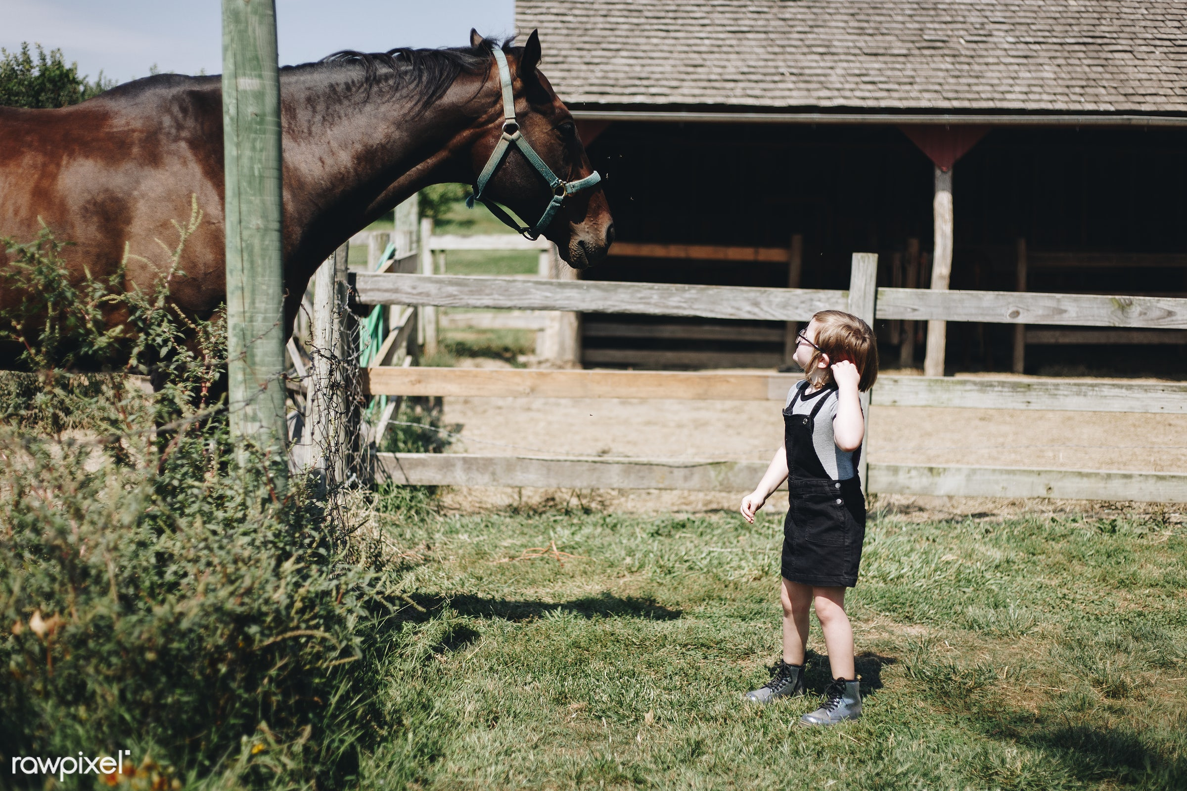 Young girl with a horse in the field - animal, pet, usa, activity, america, american, canada, canadian, caucasian, child,...