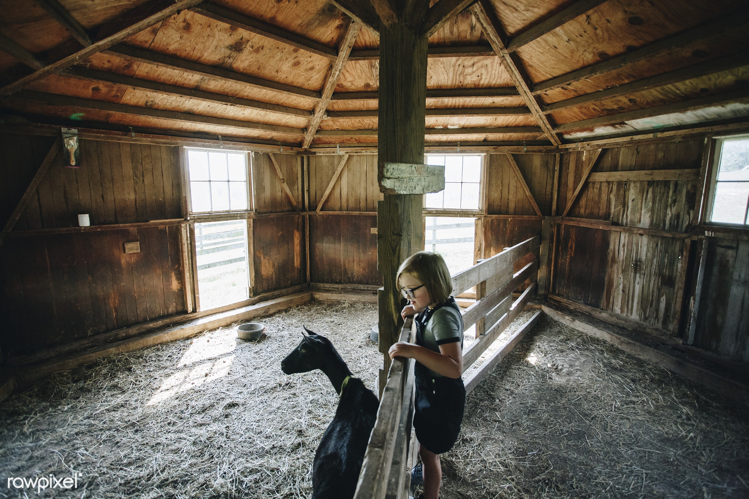 Little girl playing with a goat - alone, america, american, canada, canadian, cheerful, child, countryside, daughter,...