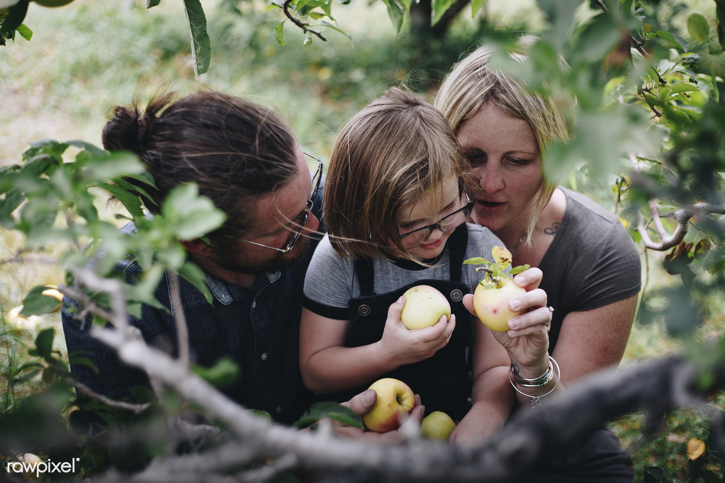 A Caucasian family is spending time at the farm together - apple, america, american, apples, canada, canadian, caucasian,...