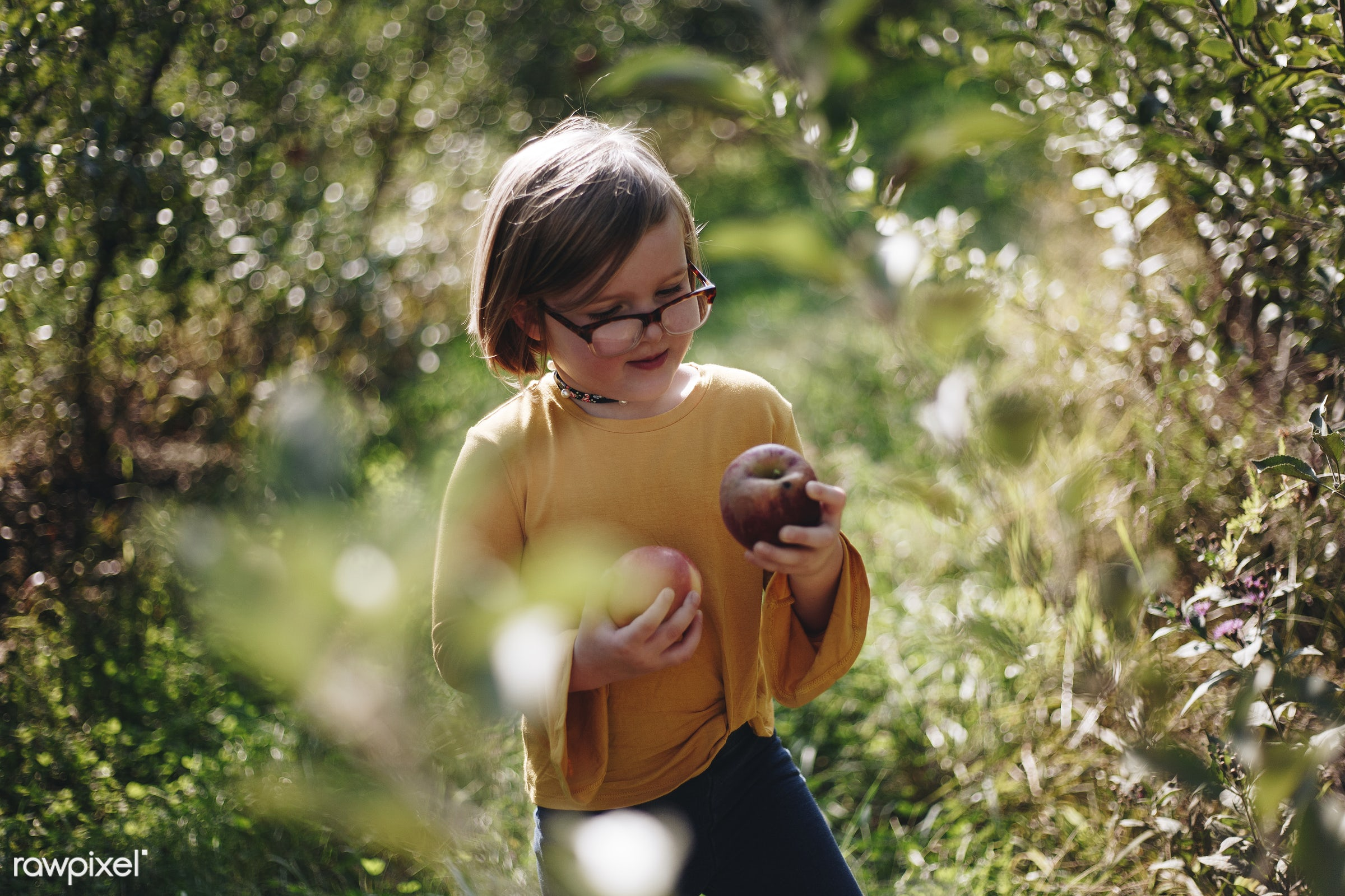 Little girl picking holding some apples - alone, america, american, apple, canada, canadian, cheerful, child, countryside,...