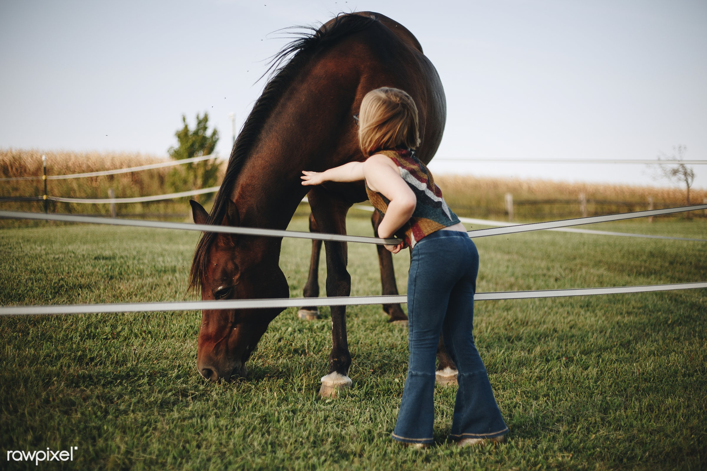 Little girl playing with a horse - horse, animal, friend, activity, america, american, canada, canadian, child, countryside...