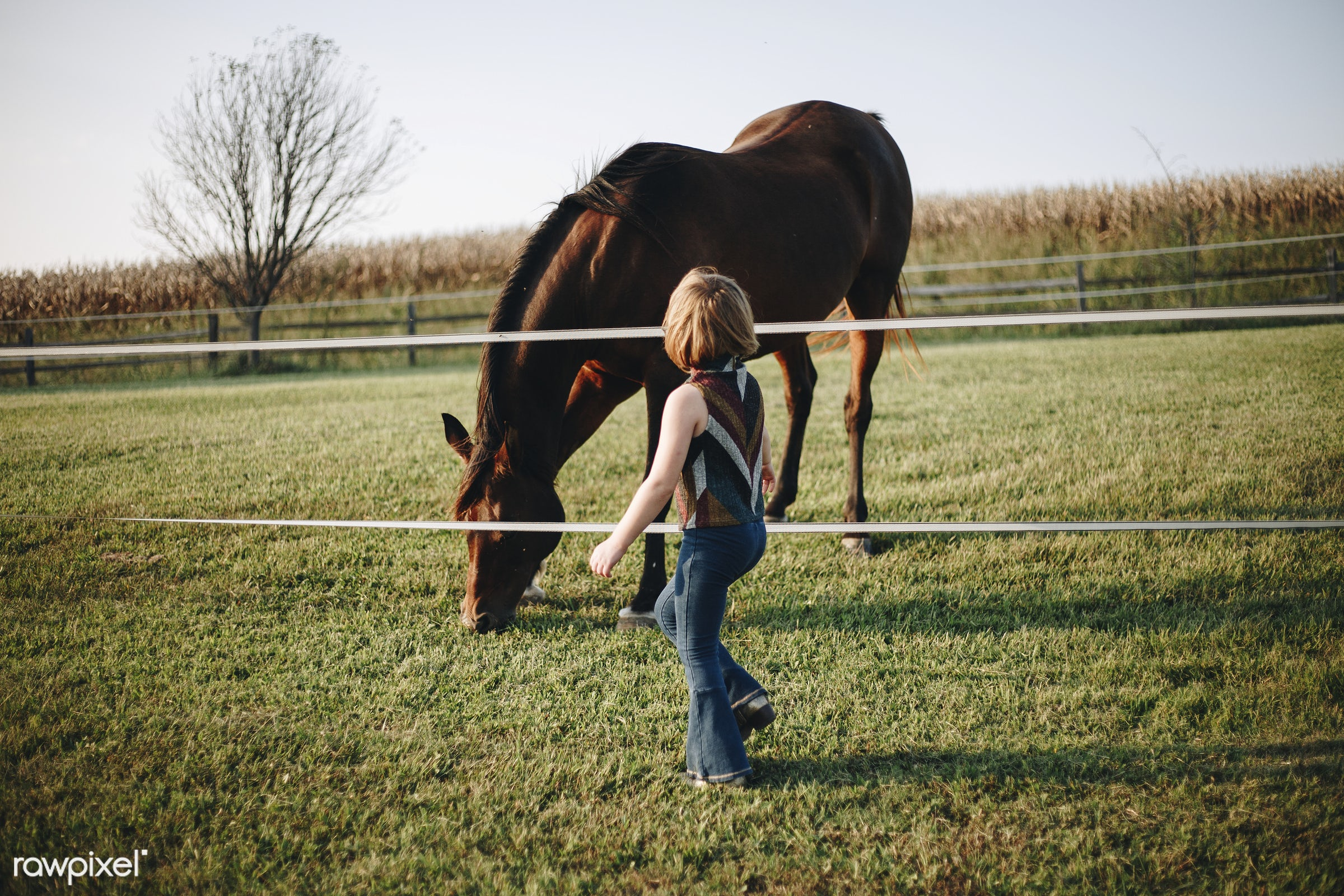 Little girl playing with a horse - animal, kid, activity, america, american, canada, canadian, child, countryside, european...