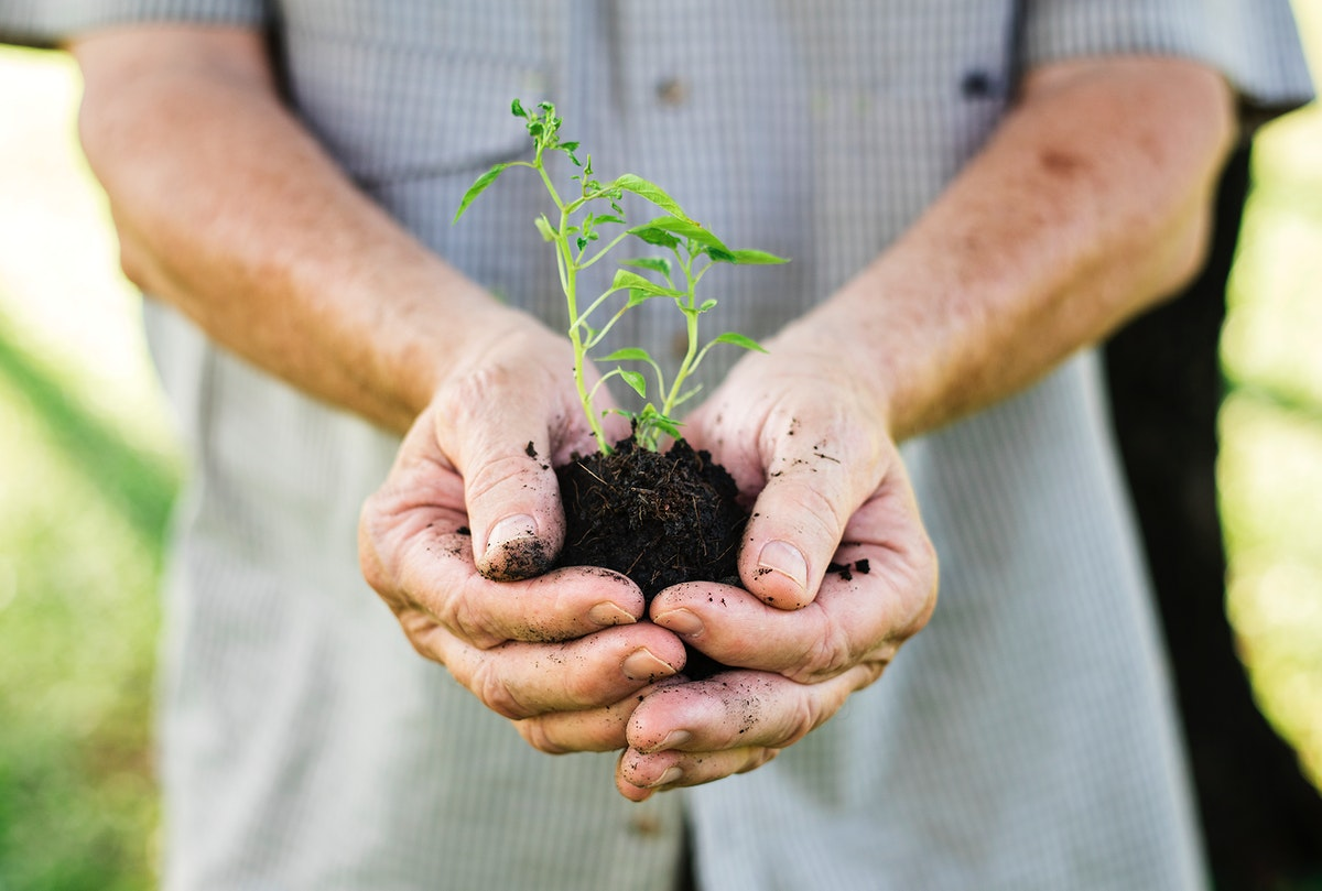 Closeup of a man holding a small plant