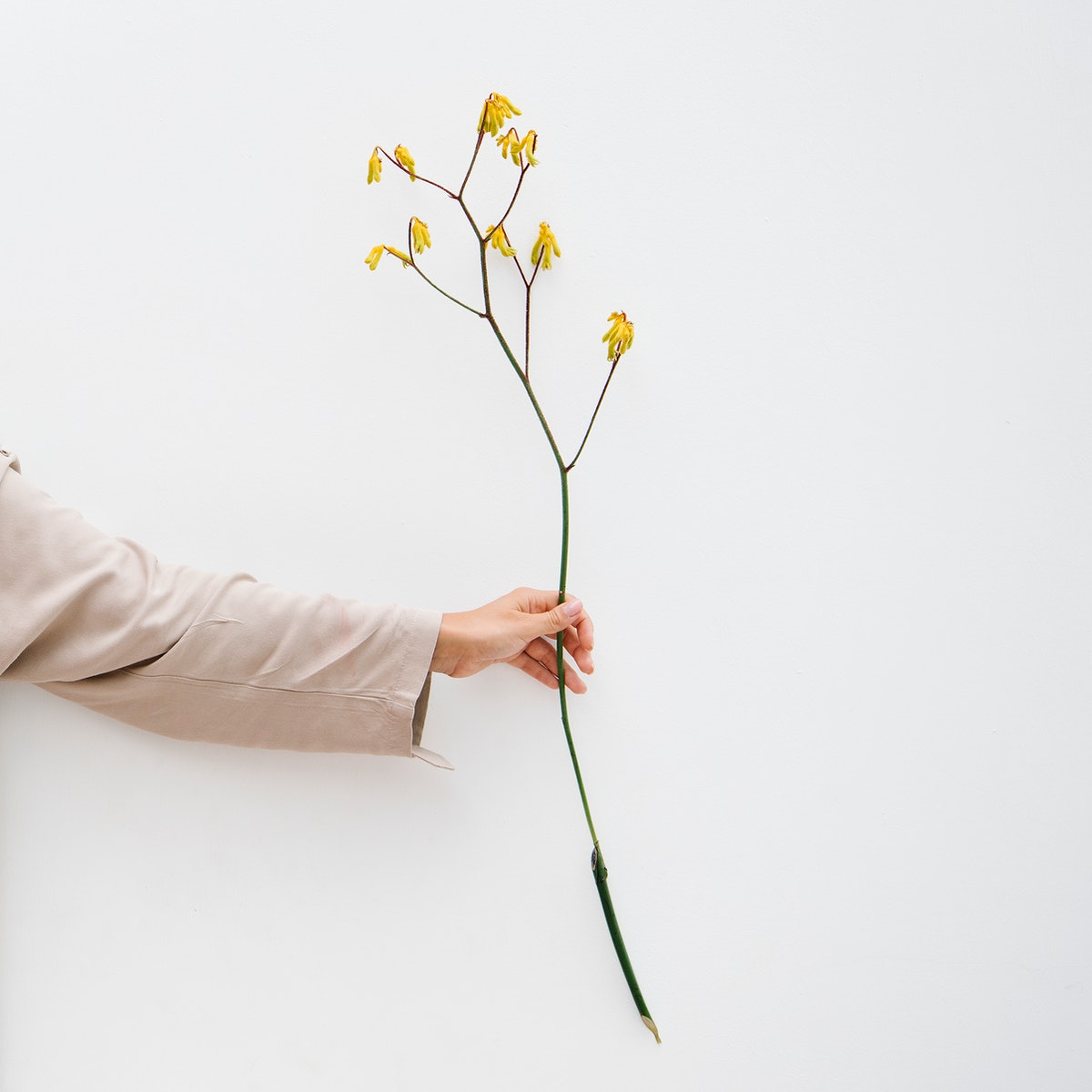 Hand holding a yellow flower by the wall