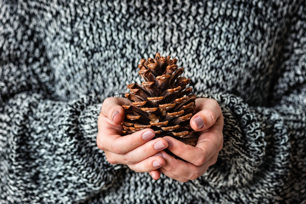 Woman holding a conifer cone on her hands