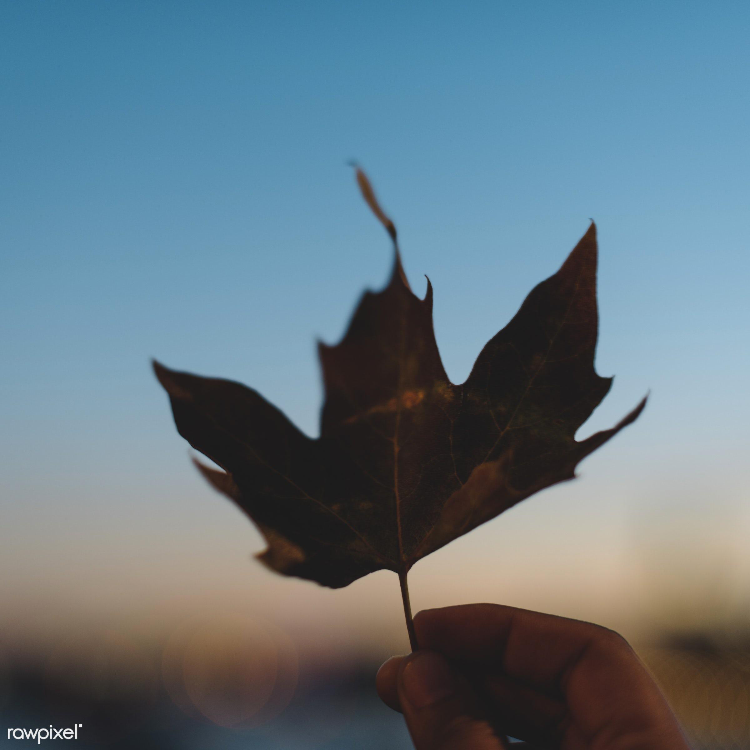 autumn, autumn leaves, beautiful, botanical, botany, defoliation, dry, fade, fall, falling, falling leaves, feminism,...