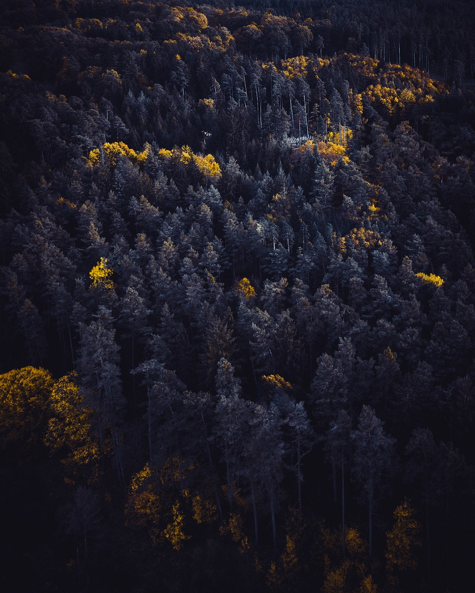 Aerial view of Schwarzwald, the black forest, Germany