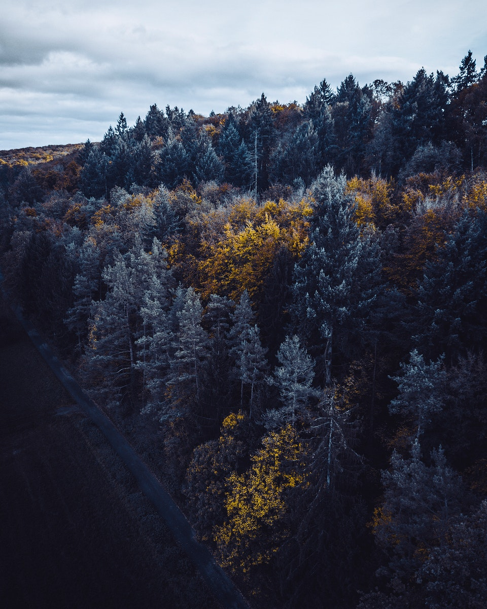Aerial view of autumn forest in Stuttgart, Germany