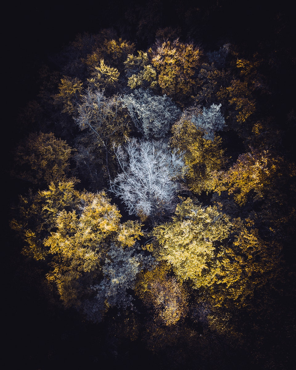 Aerial view of the forest of Vaihingen an der Enz, Germany