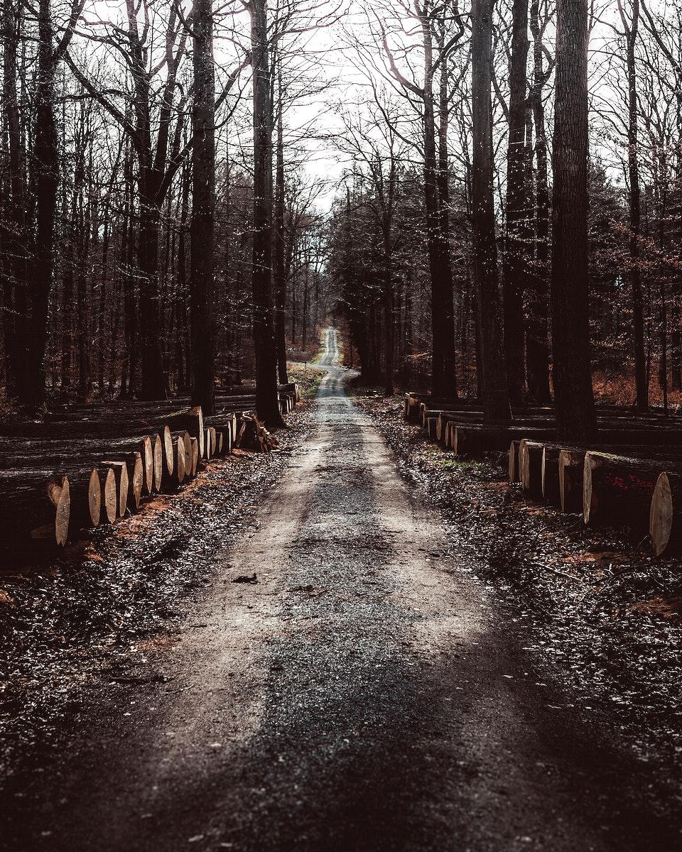 Quiet road through the forest of Vaihingen an der Enz, Germany