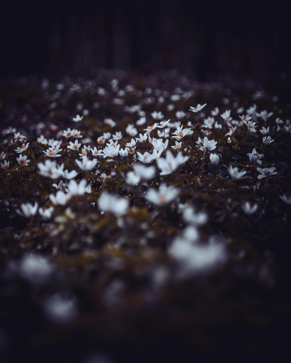 Wildflowers in the forest of Vaihingen an der Enz, Germany