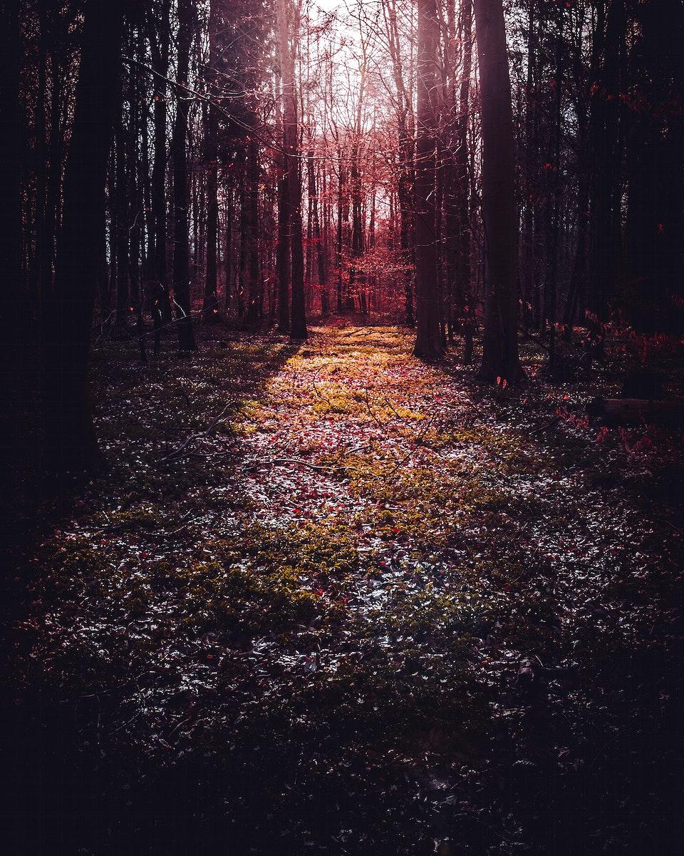Sun shining through the trees at Vaihingen an der Enz, Germany