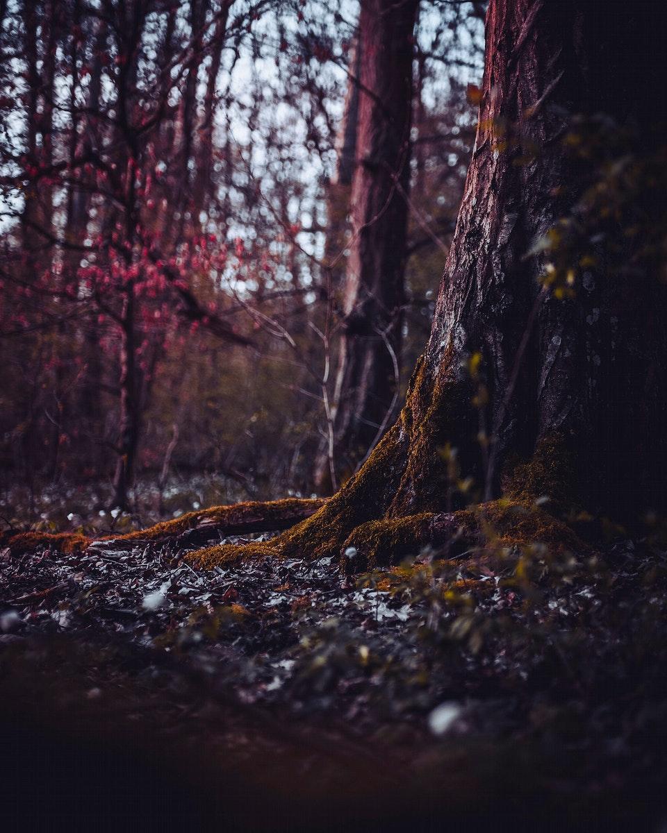 Deep into the forest of Vaihingen an der Enz, Germany