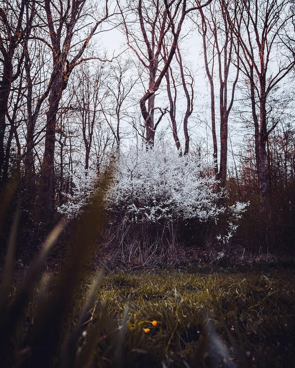 Trees in bloom at Ensinger See lake, Germany