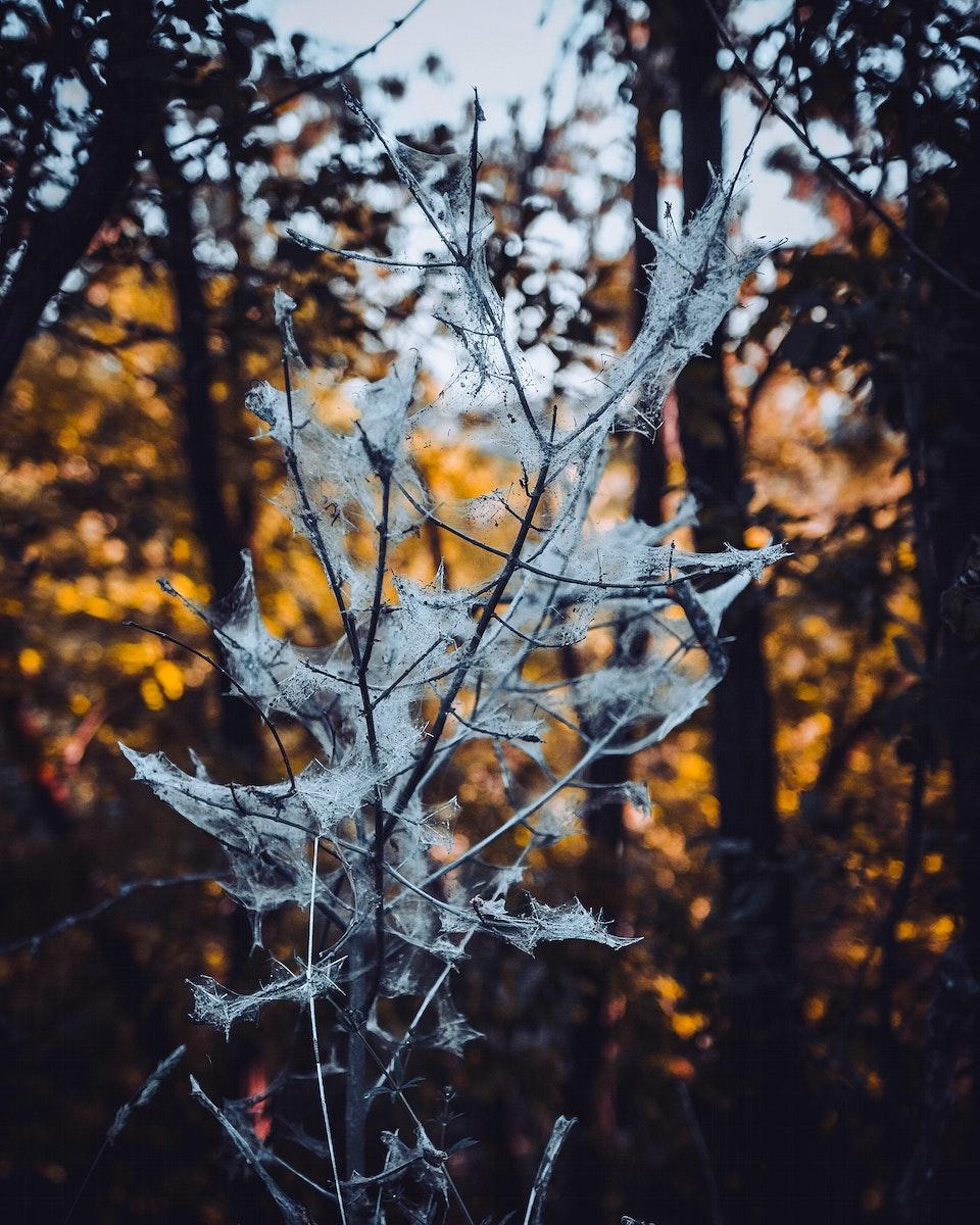 Spiderweb in the forest of Vaihingen an der Enz, Germany