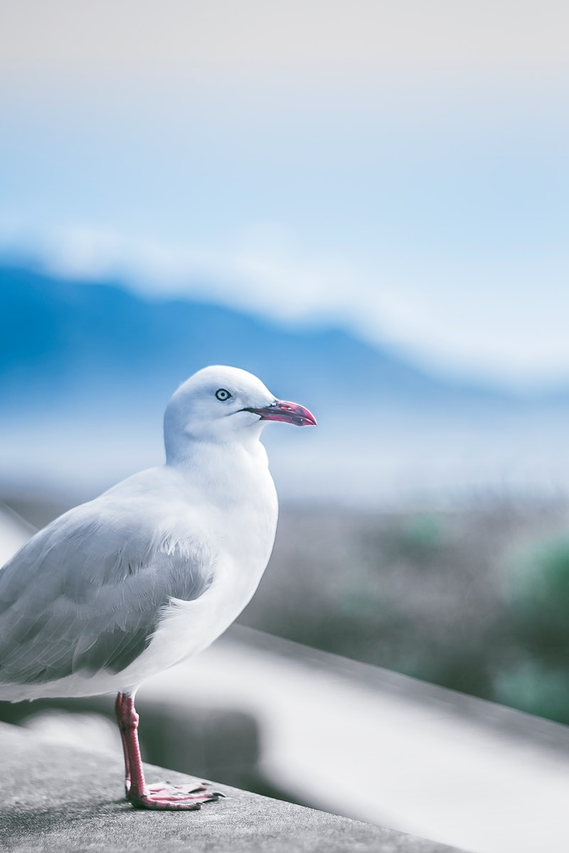 Seagull watching out over the land