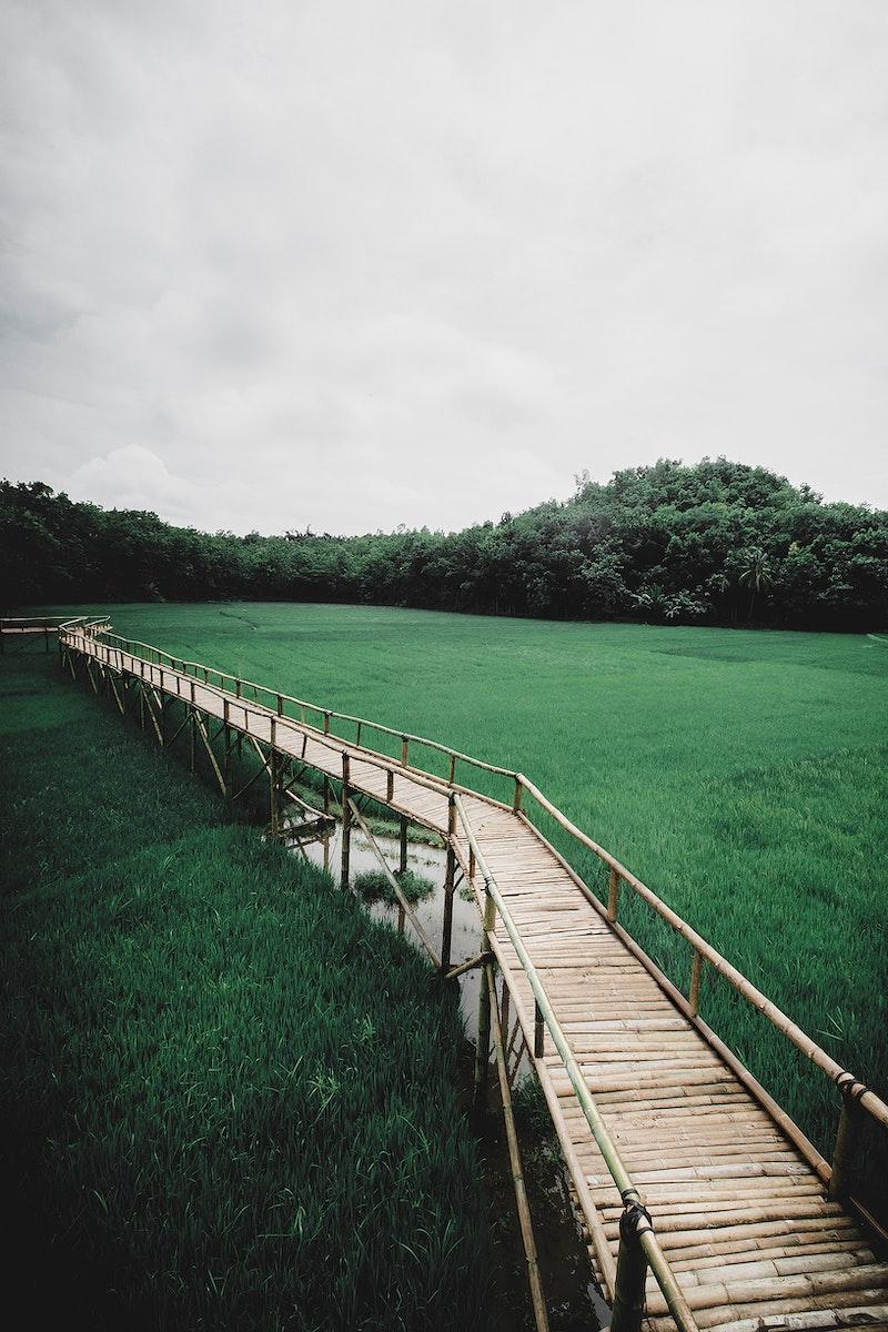 Rice fields in Mangunan Yogyakarta, Indonesia
