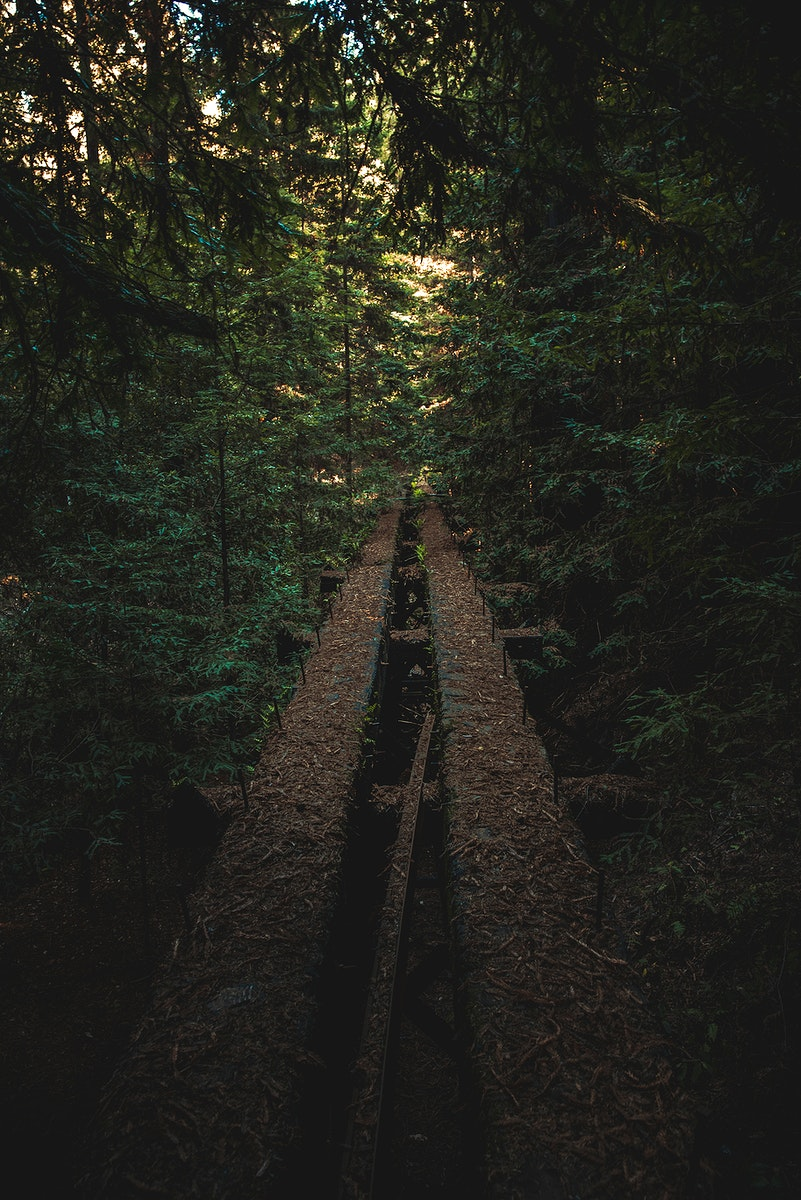 Henry Cowell Redwoods State Park in California, USA