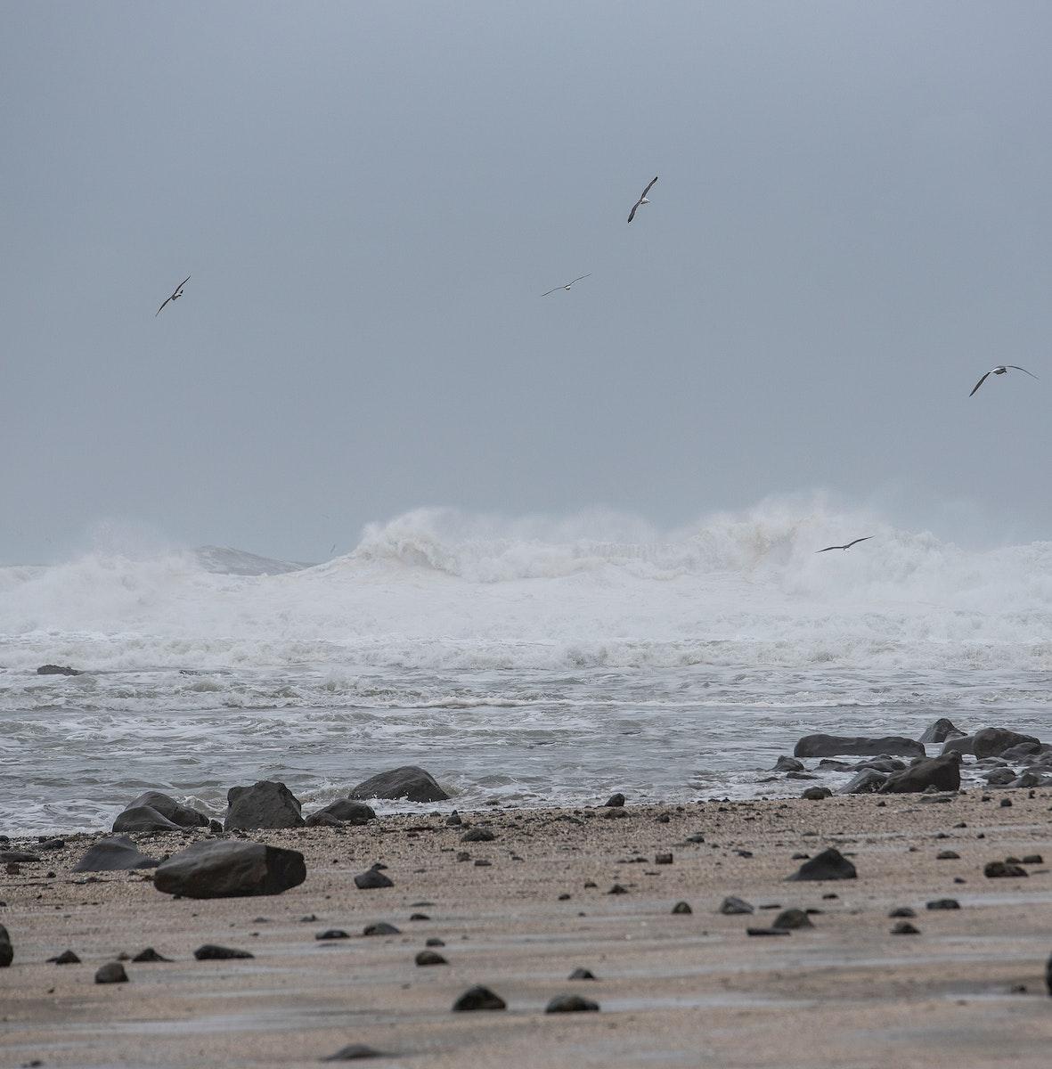 Seagulls gliding over the beach