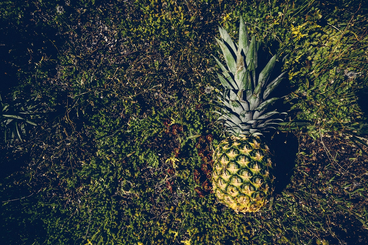 Tropical pineapple on a green lawn