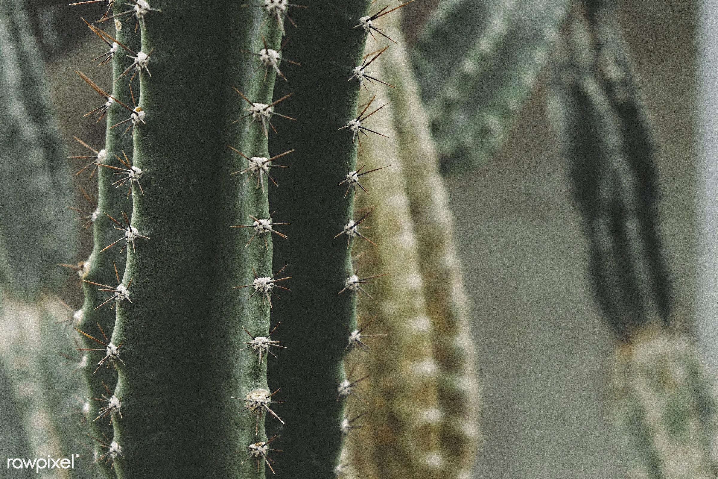 Cactus at Royal Botanical Gardens, Burlington, Canada - botanical gardens, botany, burlington, cactaceae, cacti, cactus,...