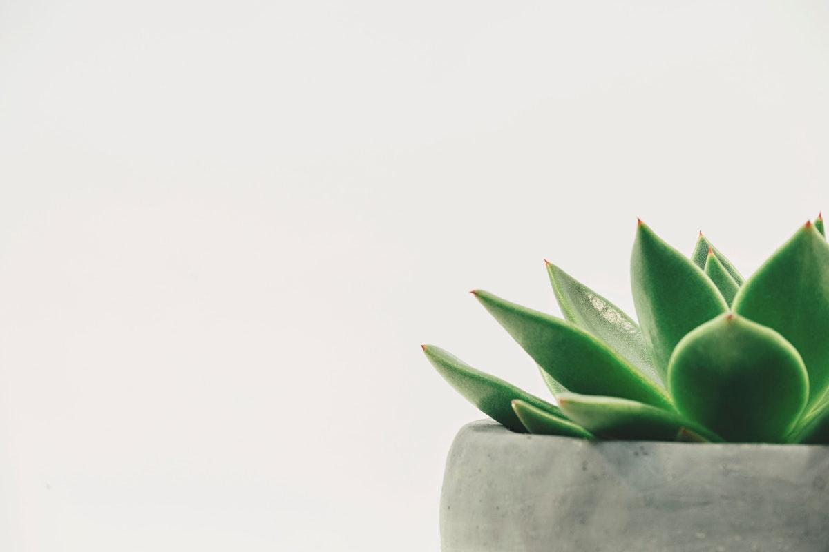 Small cactus in a gray pot