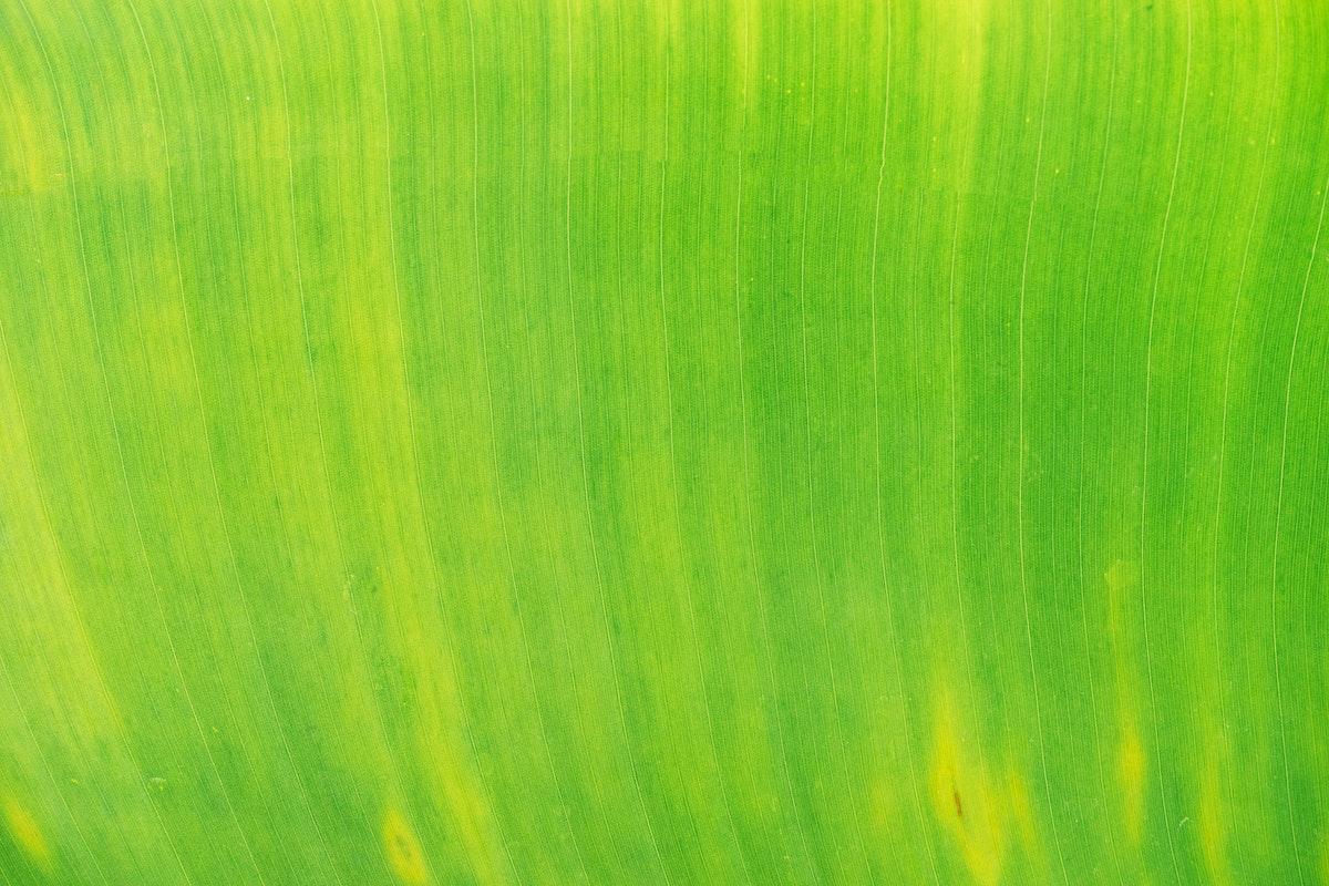 Close up on big green leaf