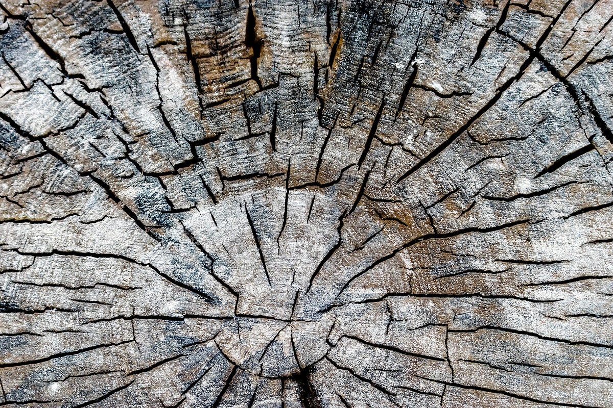 Close up of old and dried tree stump