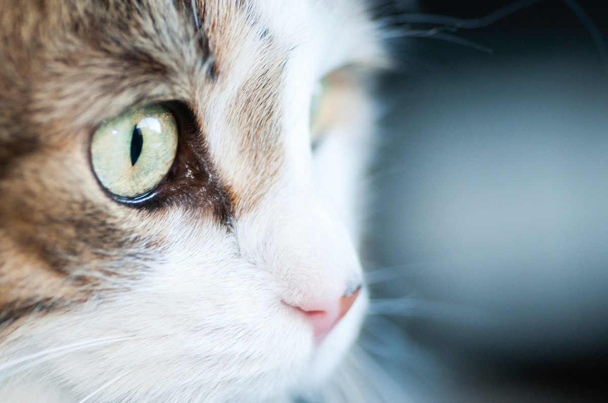 Close up of the eye of a cat