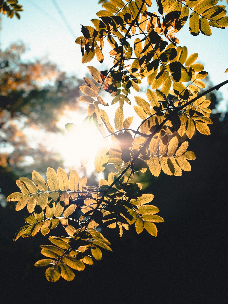 Sun beaming through the leaves during the spring in Moscow, Russia