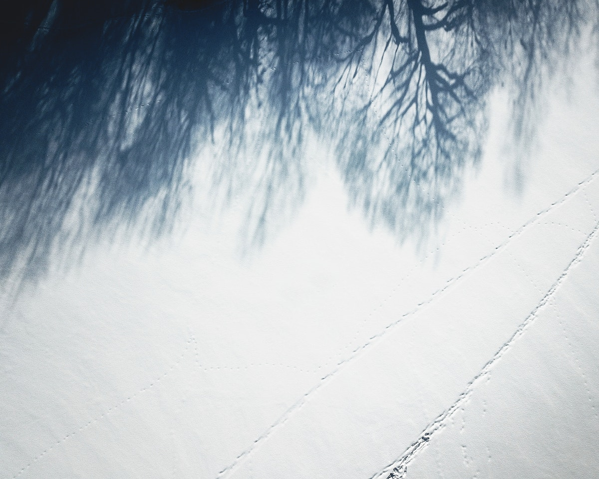 Trees shadow reflection on the snow-covered ground in Moscow, Russia
