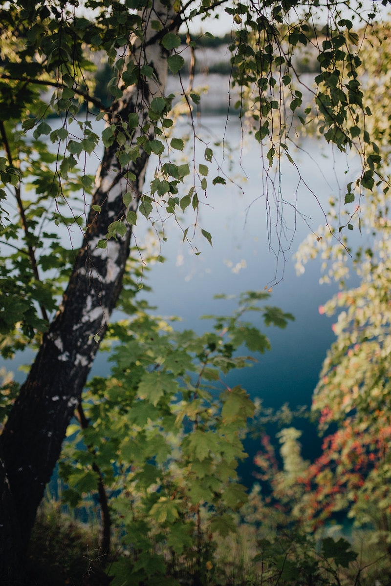 Birch trees by a lake. Visit Kaboompics for more free images.