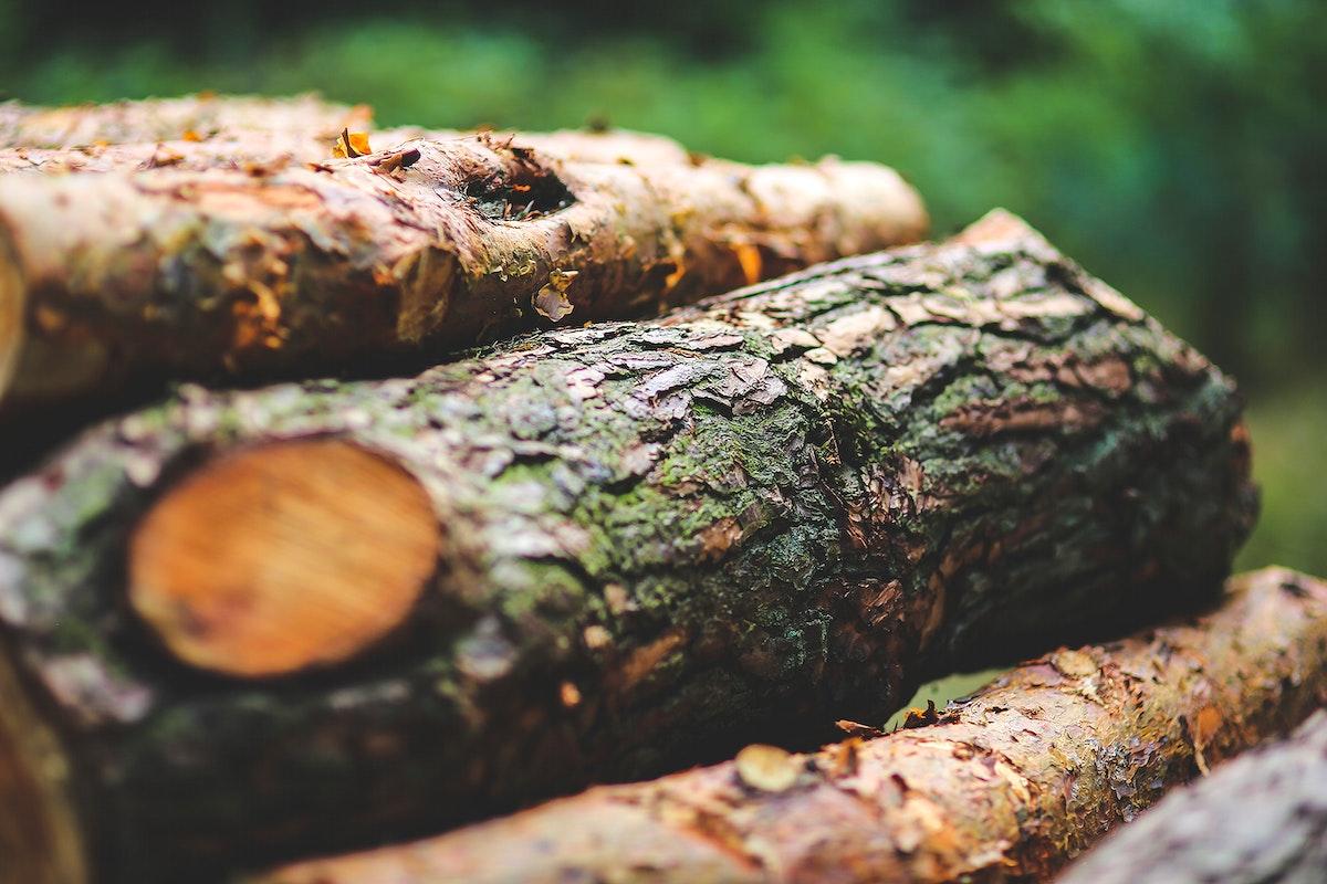 Freshly cut logs. Visit Kaboompics for more free images.