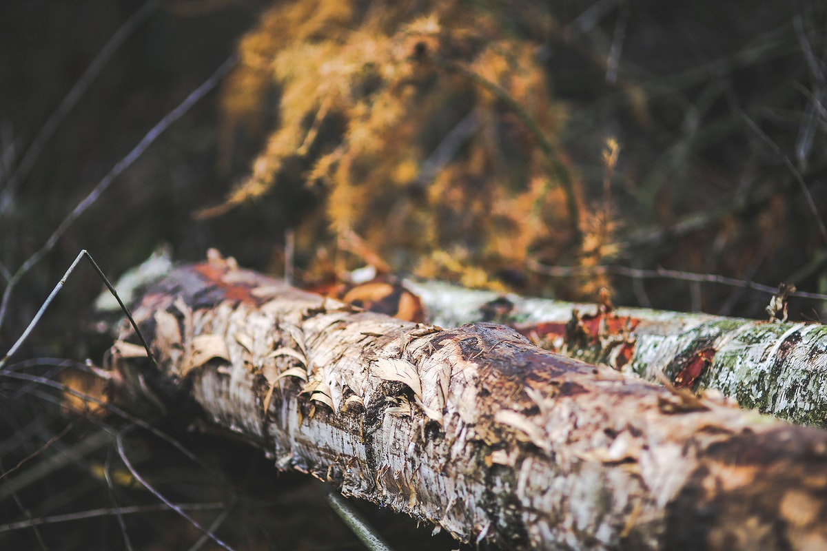 Two logs in the forest. Visit Kaboompics for more free images.