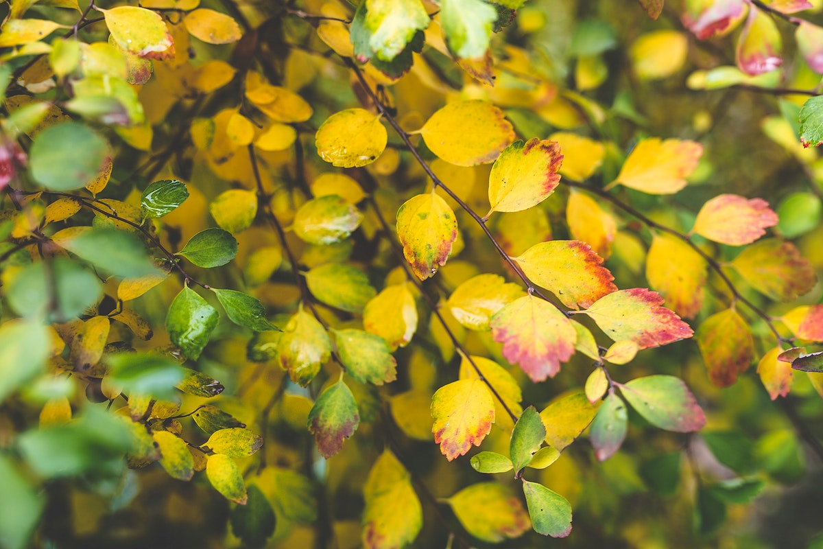 Tree with yellow foliage. Visit Kaboompics for more free images.
