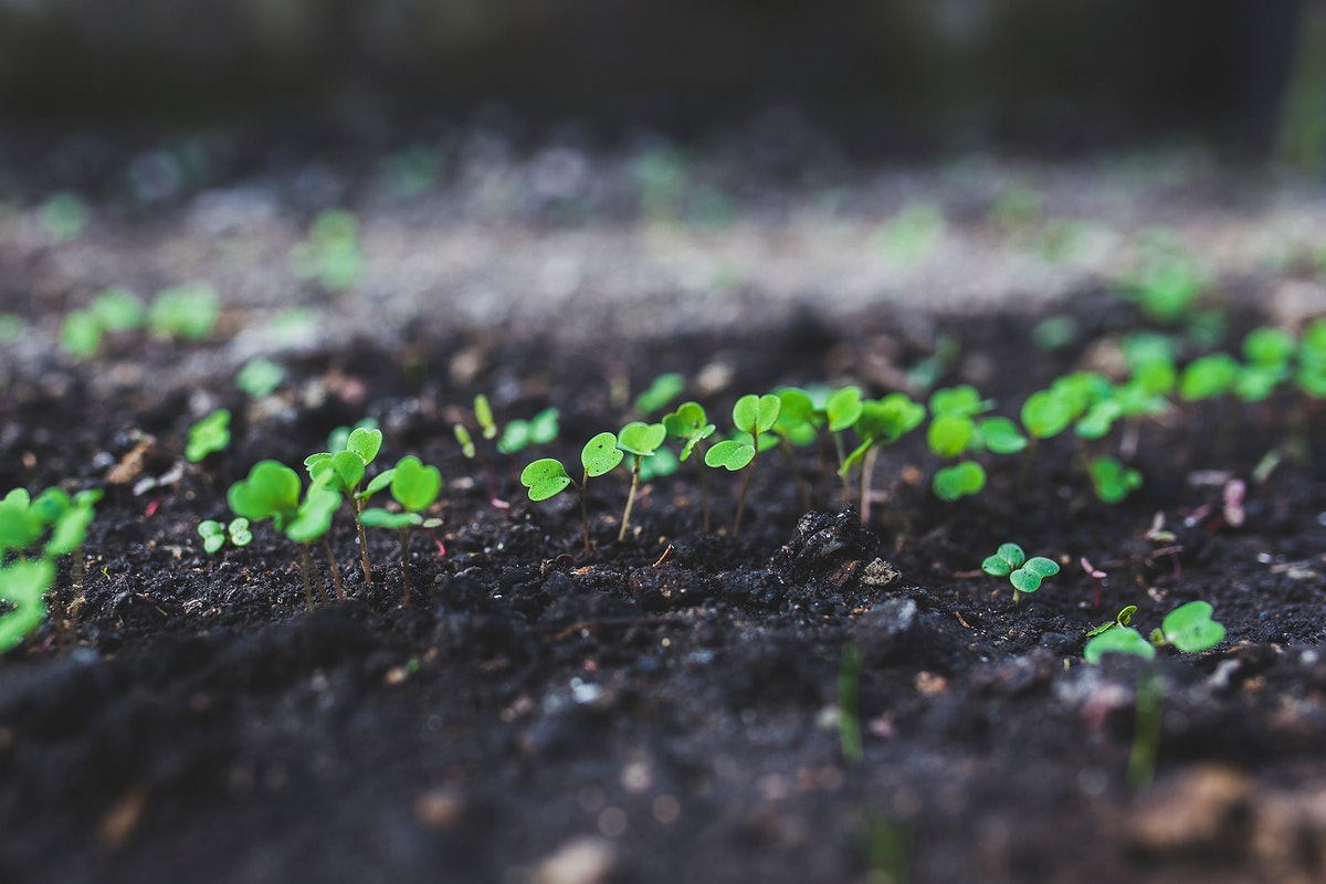Plant seedling. Visit Kaboompics for more free images.