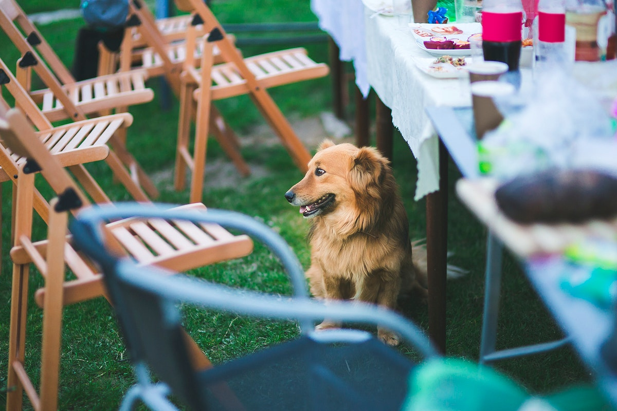 Dog sitting under table in the garden. Visit Kaboompics for more free images.