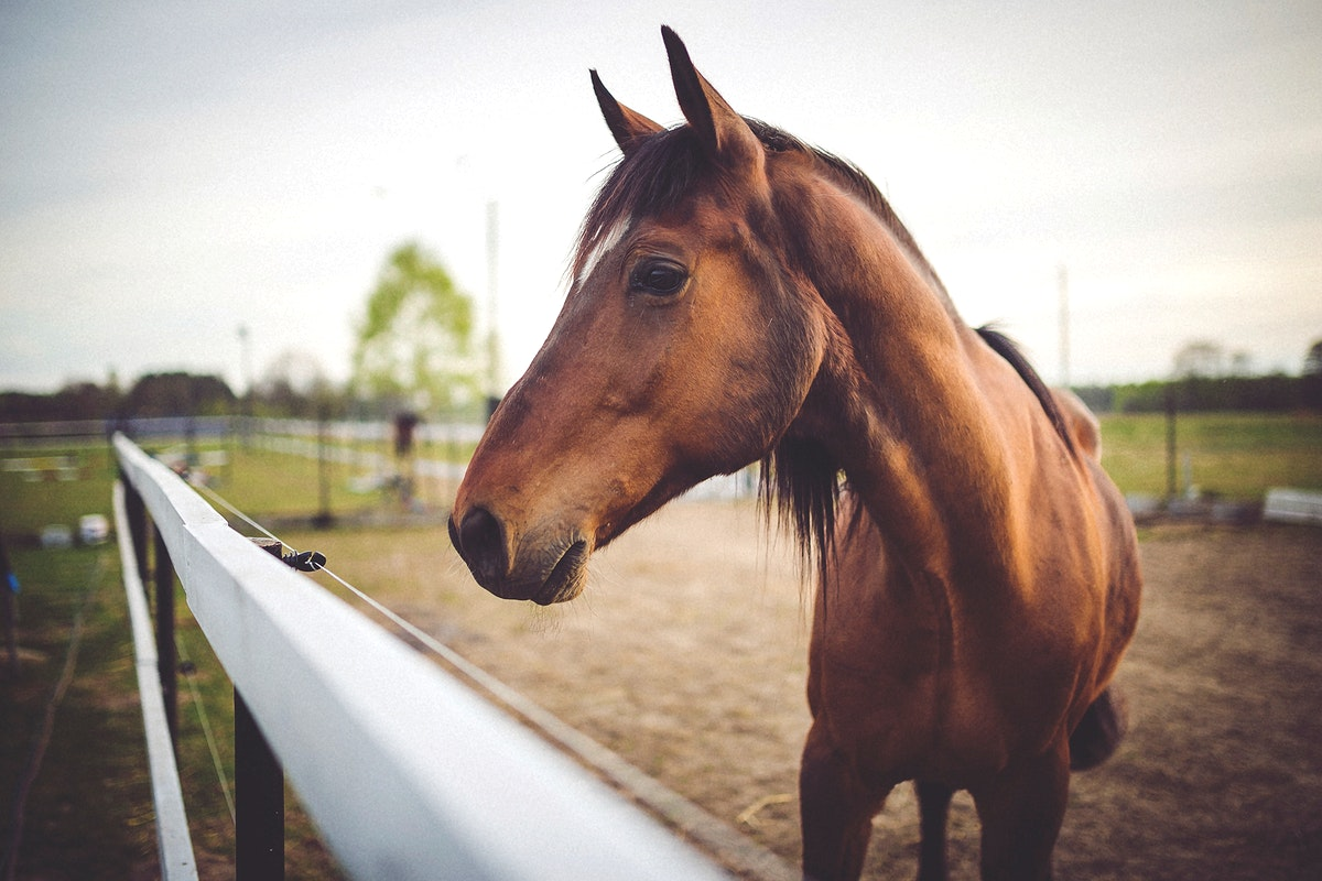 Closeup of a brown horse in a field. Visit Kaboompics for more free images.
