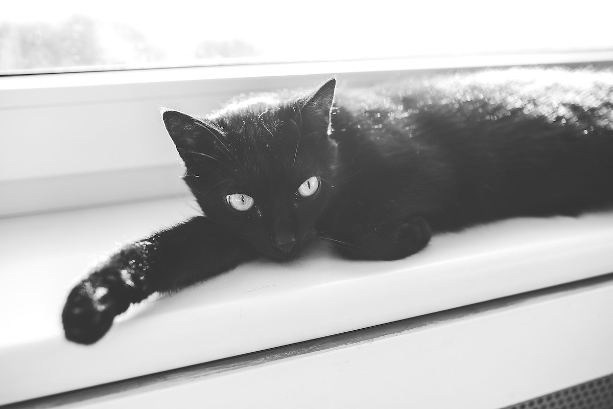 Black cat sleeping in the window. Visit Kaboompics for more free images.