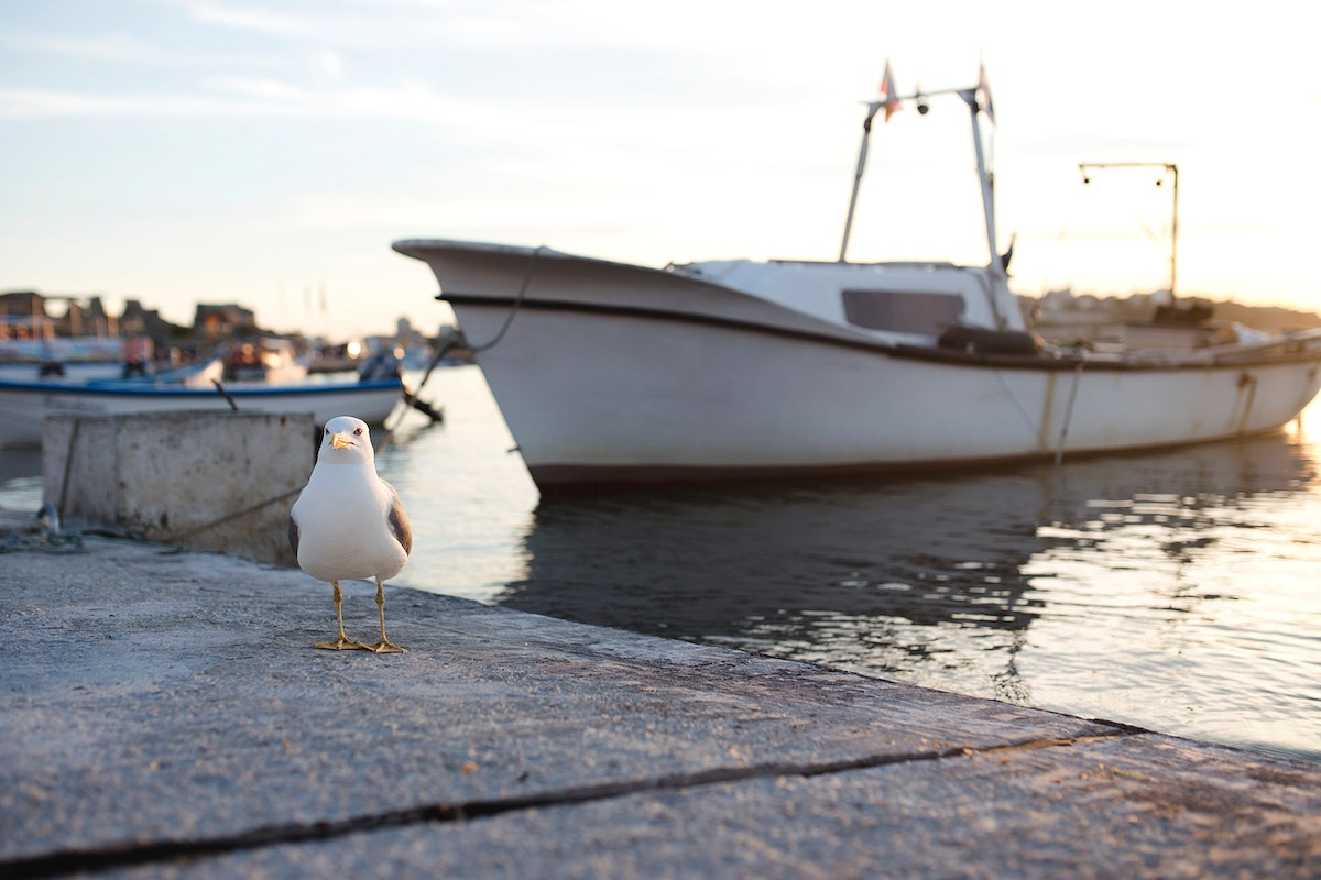 Seagull sitting at the pier. Visit Kaboompics for more free images.