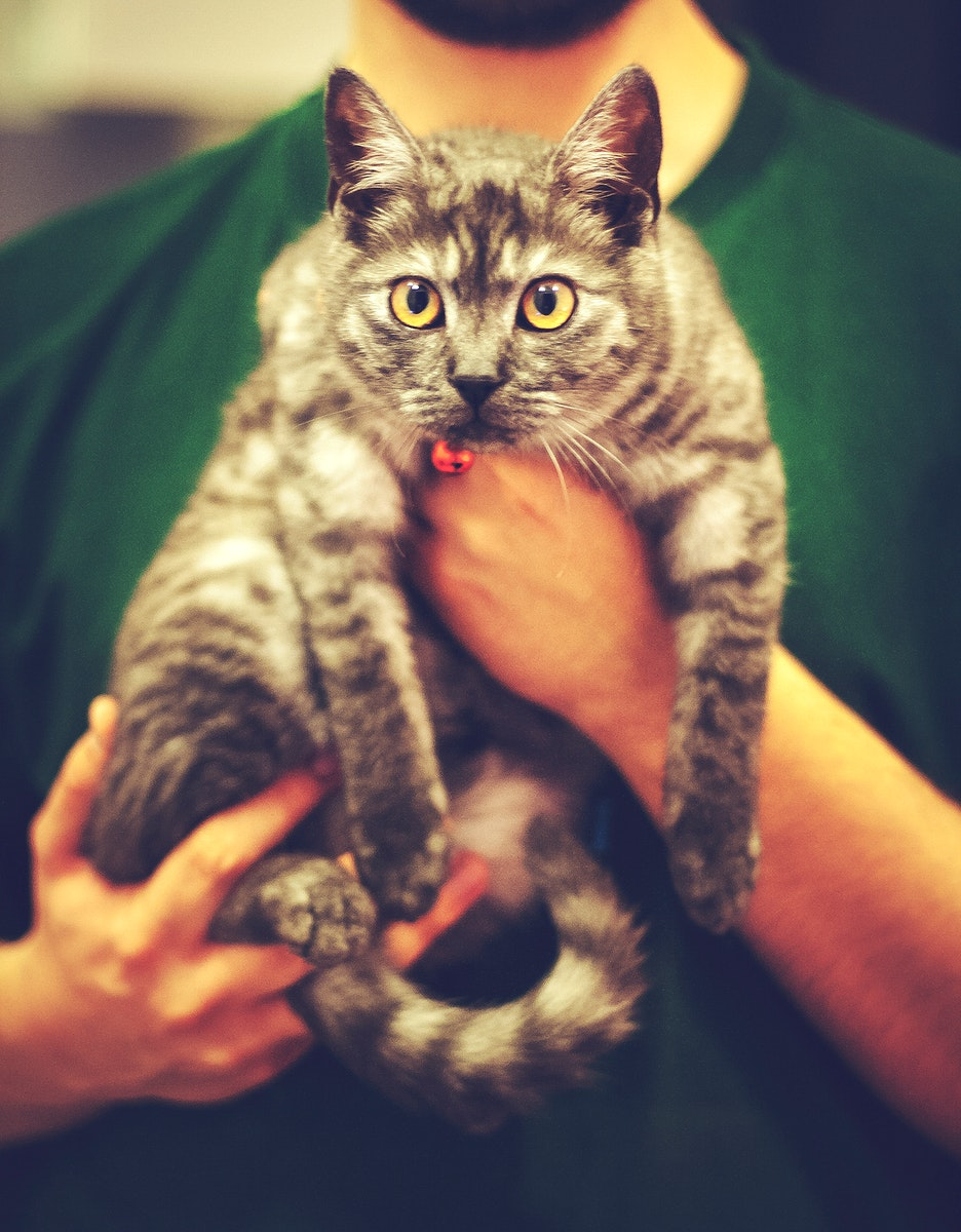 Man holding a furry cat. Visit Kaboompics for more free images.