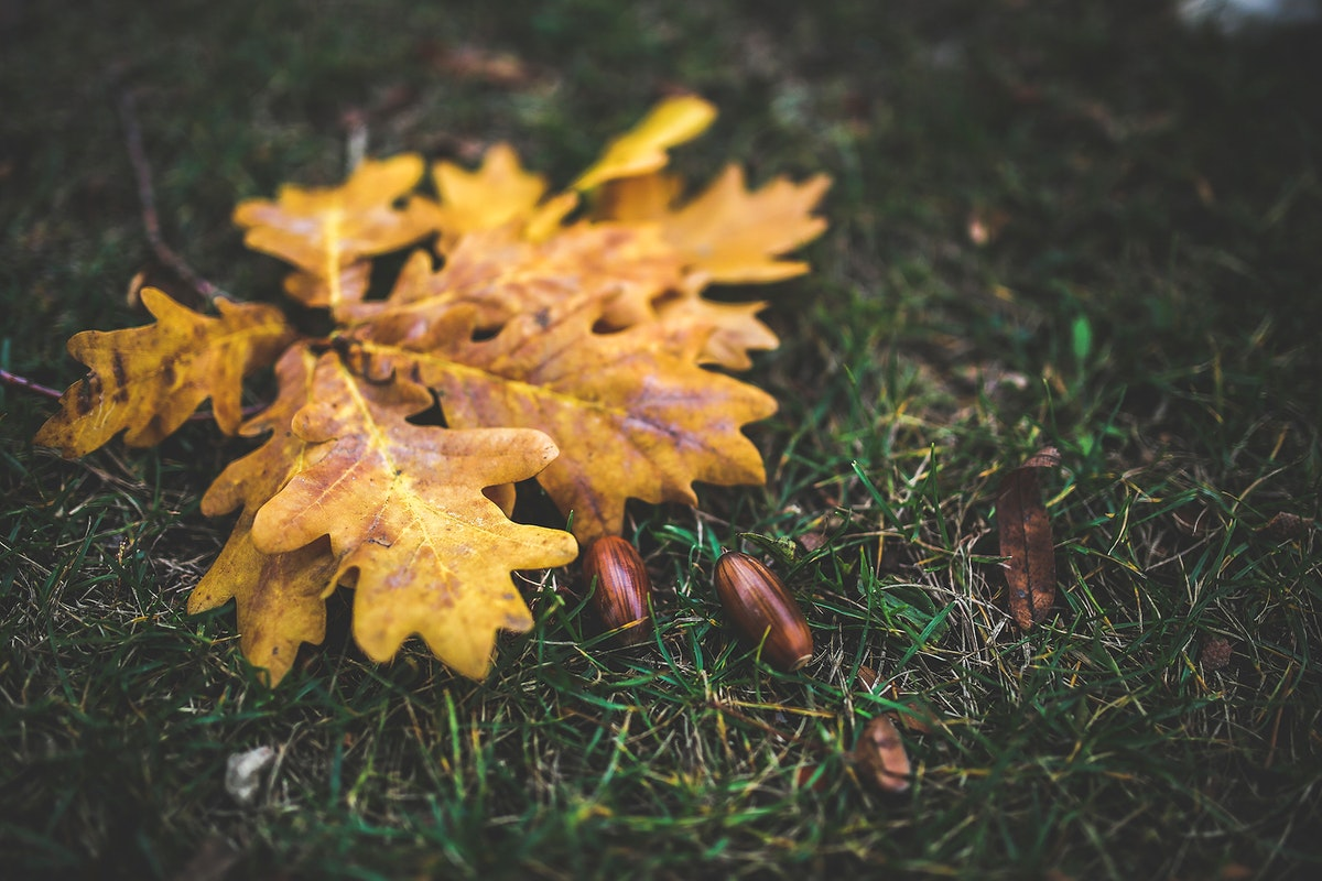 Fallen oak leaves on the ground. Visit Kaboompics for more free images.