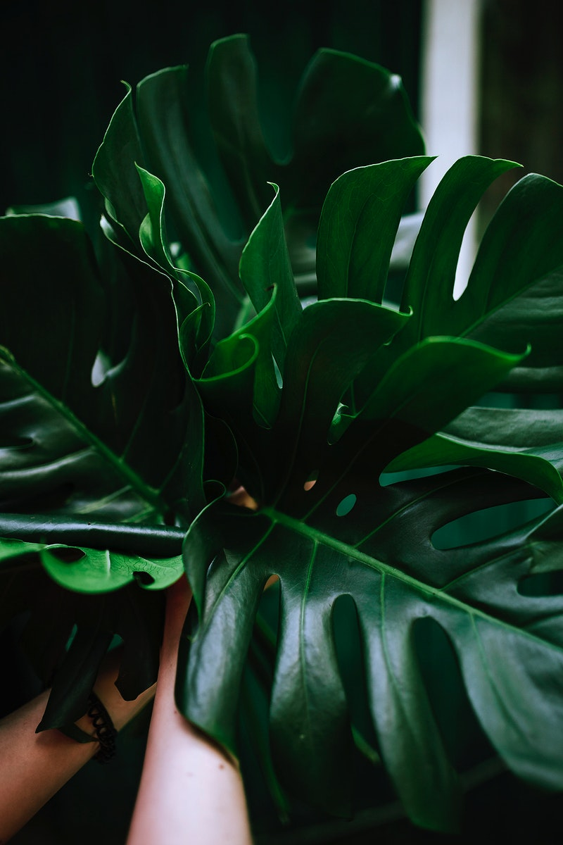 Tropical ornamental plant. Visit Kaboompics for more free images.