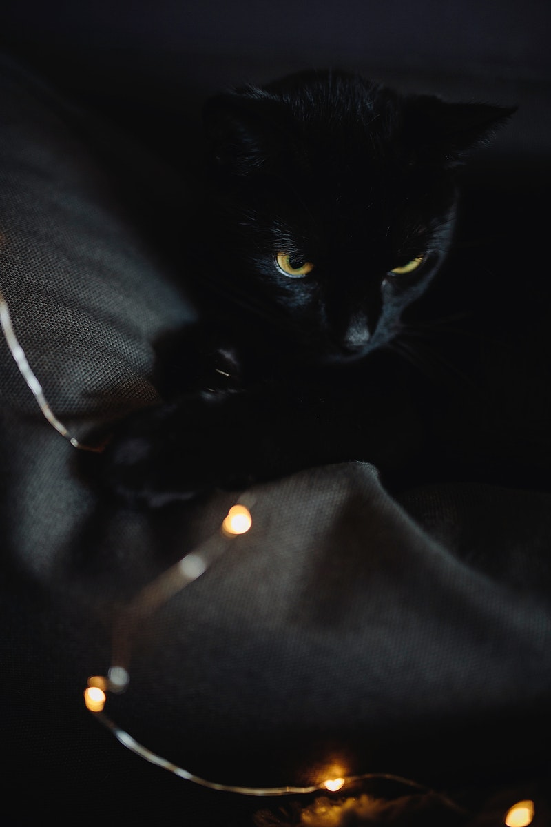 Black cat with lights. Visit Kaboompics for more free images.