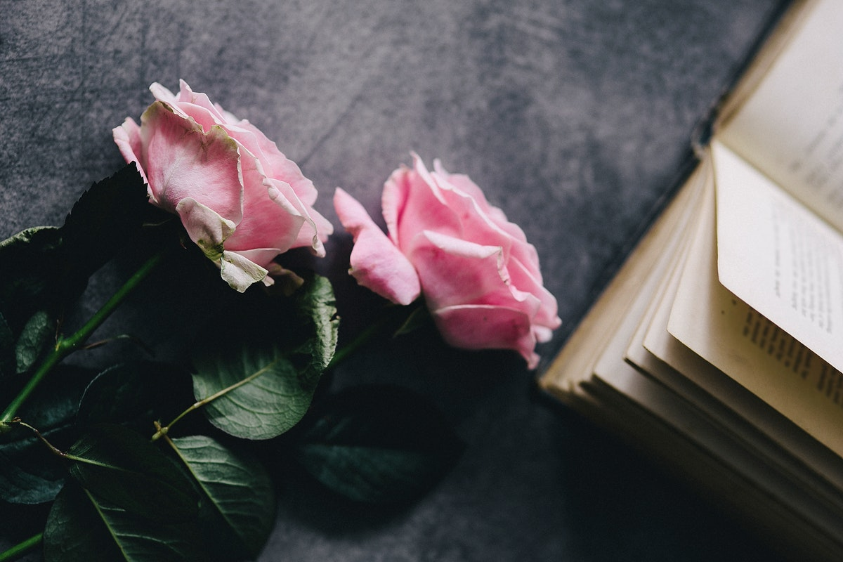 Pink roses by a book. Visit Kaboompics for more free images.